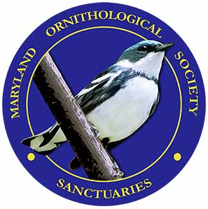 Sanctuary Logo - MOS