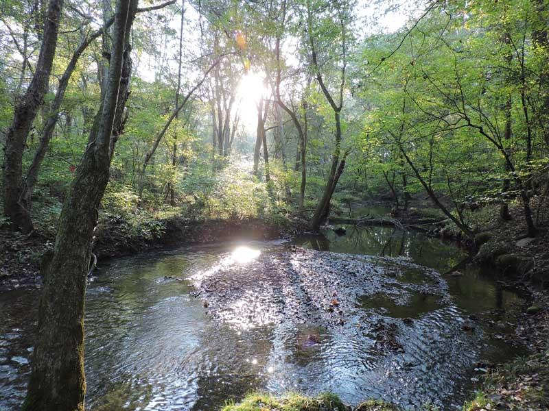 Myrtle Simon Pelot Sanctuary - Stream