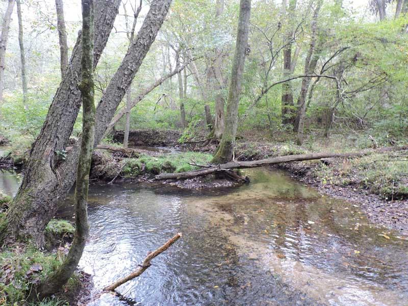 Myrtle Simon Pelot Sanctuary - Stream2