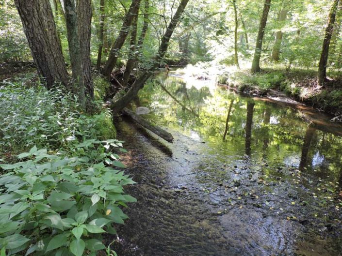 Myrtle Simon Pelot Sanctuary - Stream3