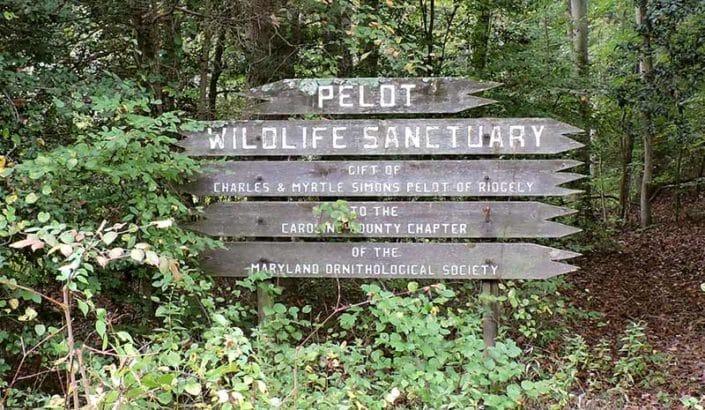 Myrtle Simon Pelot Sanctuary - Welcome Sign