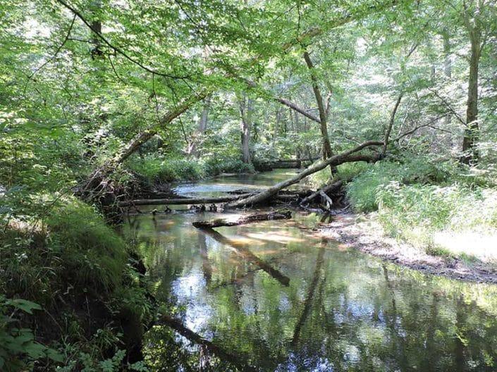 Myrtle Simon Pelot Sanctuary - Woods