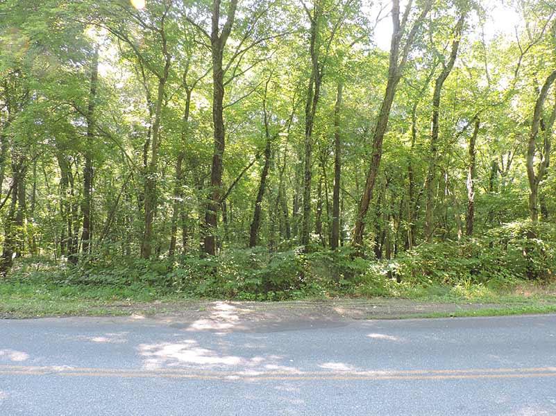 Myrtle Simon Pelot Sanctuary - Woods2