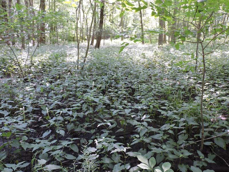 Myrtle Simon Pelot Sanctuary - Woods3