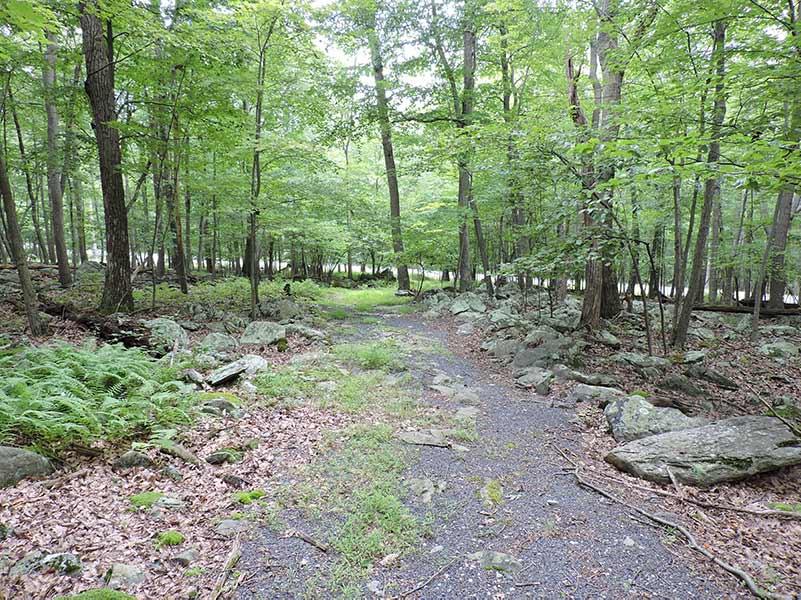 Seymour B. Cooper Sanctuary - Trail
