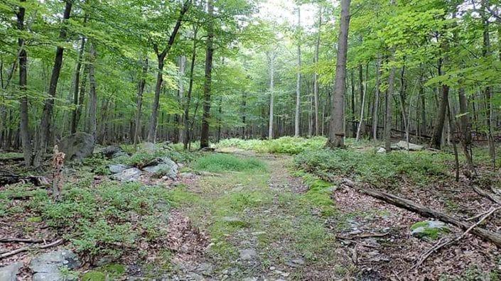 Seymour B. Cooper Sanctuary - Woods