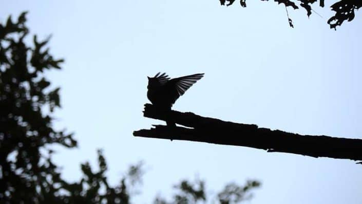 Caroline W. Wilson Sanctuary - Bird in silhouette