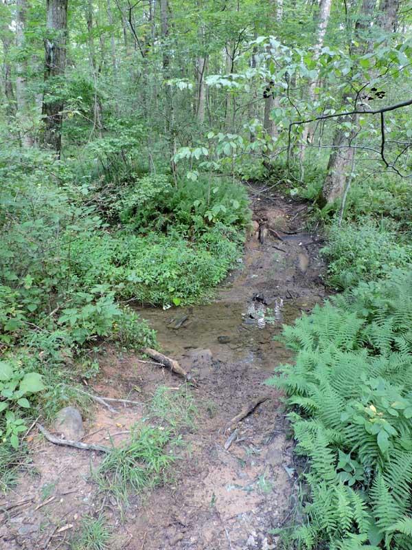 Caroline W. Wilson Sanctuary - Stream