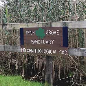 Irish Grove Sanctuary - Maryland Ornithological Society